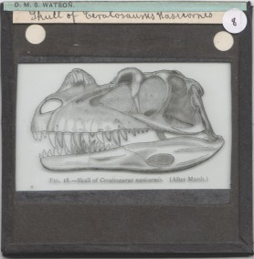 Grant Museum lantern slide of a Ceratosaurus skull from the D.M.S Watson collection at University College London